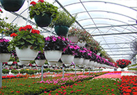 Horticulture & Floriculture
